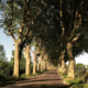 Route d'Uzès